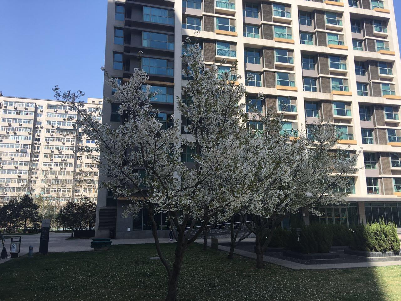 北京海晟名苑外景图
