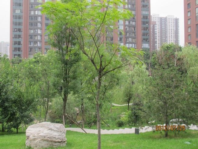 北京融科.橄榄城三期外景图